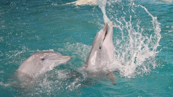 Zoo dofí delfinari