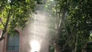 fumigació plaga plàtans