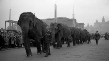 Elefants passejant pels carrers de Barcelona
