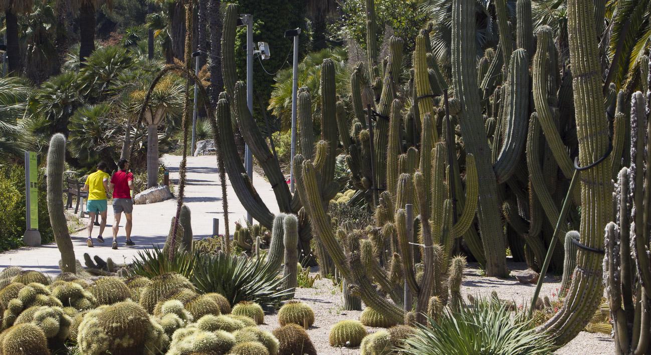 Jardins de Mossn Costa i Llobera Web de Barcelona