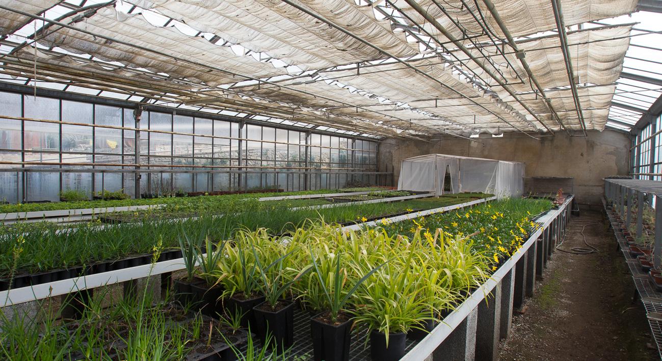 Vivero municipal de plantas tres pins gu a bcn agenda for Viveros barcelona
