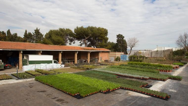 Viver Municipal de Plantes Tres Pins - Febrer 2015