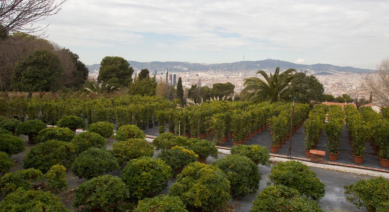 Viver municipal de plantes tres pins web de barcelona for Viveros barcelona
