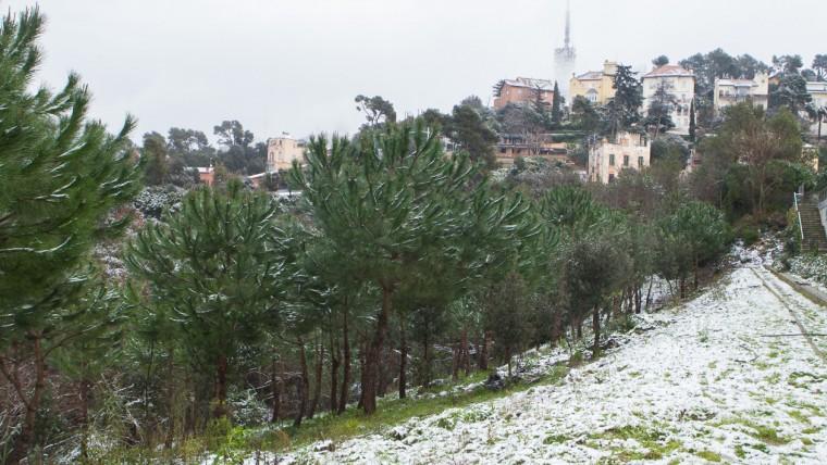 Parc de Collserola - Febrer 2015