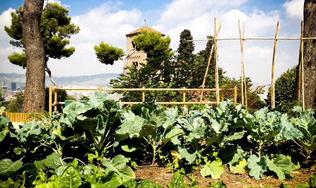 Sembra natura augmenta el verd a casa teva ecologia - Natura casa barcelona ...