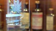 Cannabis, cannàbic, marihuana