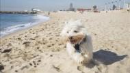gossos platja