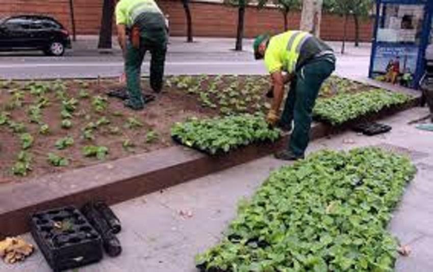 Jardineros Barcelona - Decoración Del Hogar - Prosalo.com