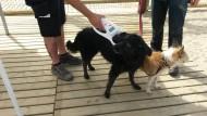 Lectura xip gossos Platja Llevant
