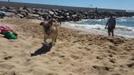 gossos 3