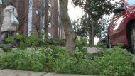 Eradicació-del-glifosat-dels-espais-verds-de-la-ciutat