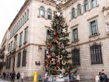 Avet de Nadal a la plaça de Sant Jaume