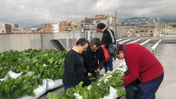 Persones del centre ocupacional Eneida recollint la collita de l'hort del carrer València