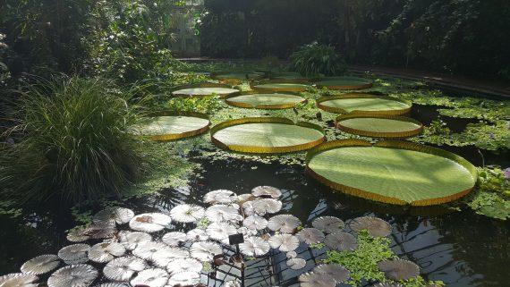 Hivernacle del Jardí Botànic d'Edimburg (Escòcia)