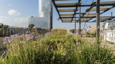 Open House BCN, Barcelona, arquitectura, coberta verda, Fàbrica del Sol