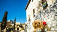 Gos davant Can Basté