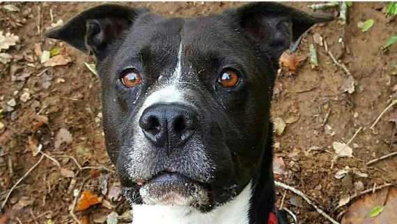 El Quim, un dels gossos del CAACB