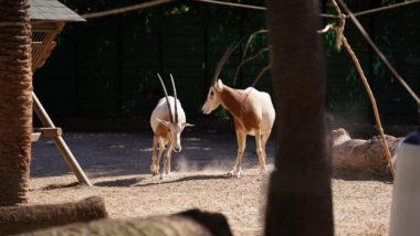 Zoo, Zoo de Barcelona, conservació, natura, fauna, animals, Barcelona, covid-19