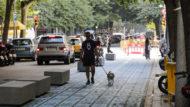 passejar el gos, panot blau, itineraris segurs, mobilitat