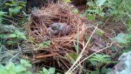Ocell dins d'un niu