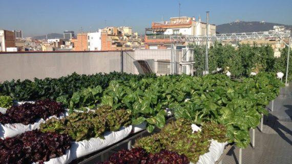 Huerto gestionado por el IMPD y las entidades en la azotea de un edificio público del Ayuntamiento de Barcelona
