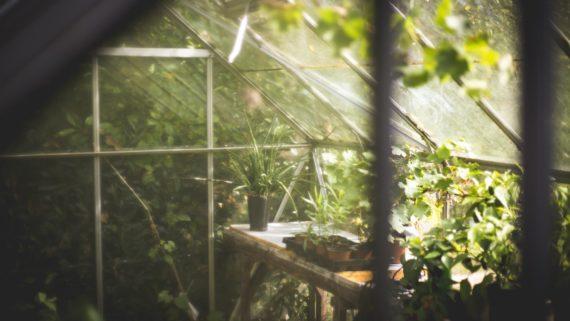 greenhouse-691704_1920